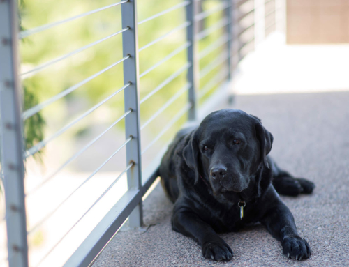 12 Tips For A Healthy, Happy Indoor Dog